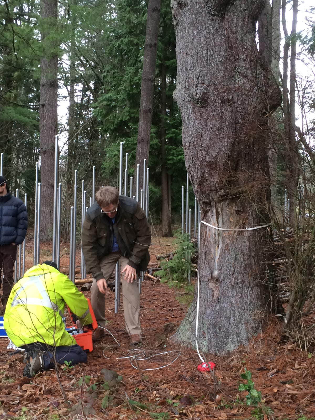using tools to assess a trees health in Surrey
